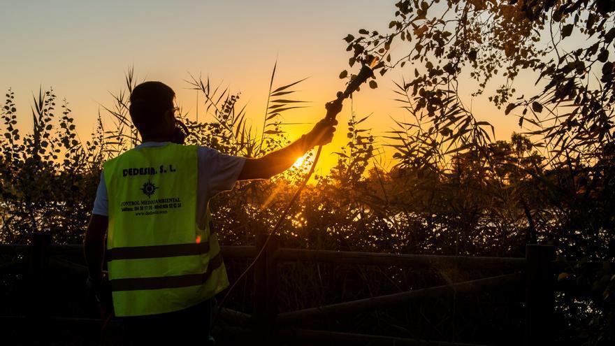El aumento de las temperaturas acelera las plagas estivales en España