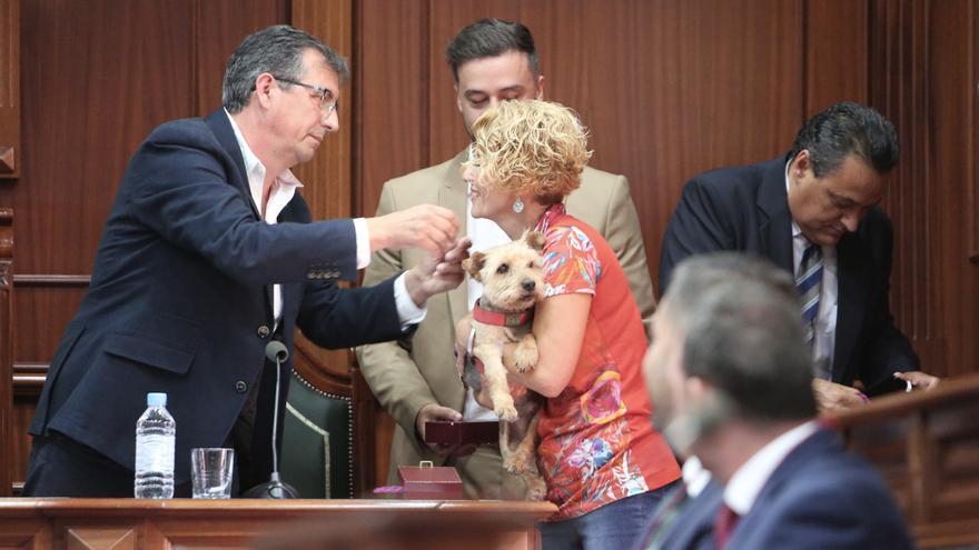 La concejala de Nueva Canarias María Aurora Saavedra tomó posesión con su mascota.