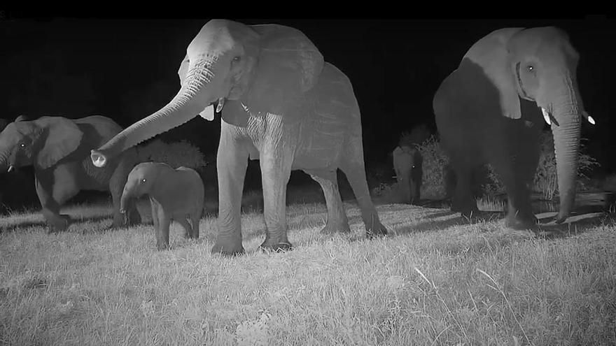 Elefantes webcam