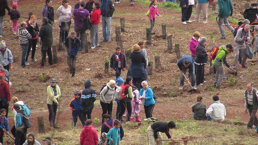 Unas 1.200 personas se citaron este domingo en la montaña de Firgas (Gran Canaria) para plantar más de 2.000 arbustos.