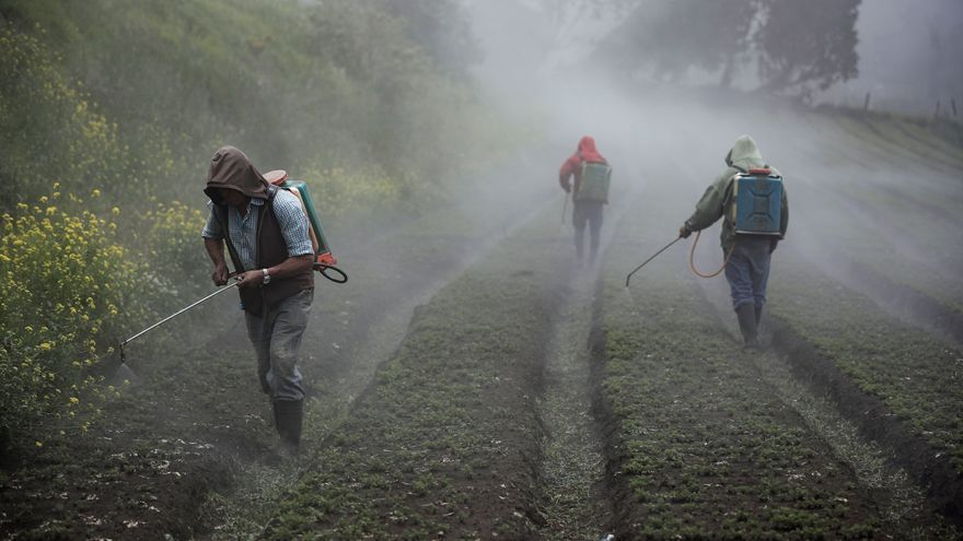 Costa Rica liderará el mejoramiento genético de cultivos en Centroamérica