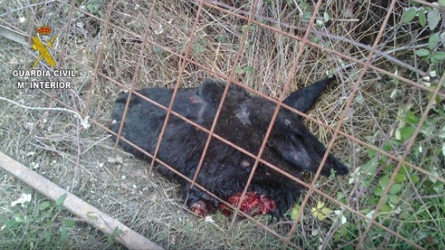 Imágenes del burro asesinado / Guardia Civil