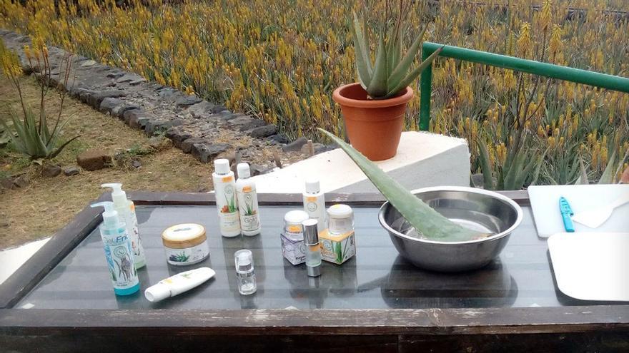 Productos elaborados con aloe vera. (R.C.I.).
