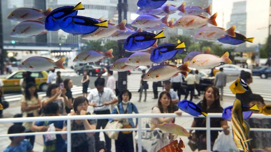 Más de 1.200 peces mueren en un acuario de Tokio por falta de oxígeno