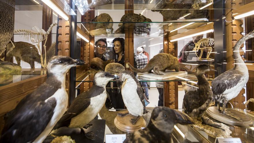 La colección de zoología del Museo de Historia Natural de la Universitat de València