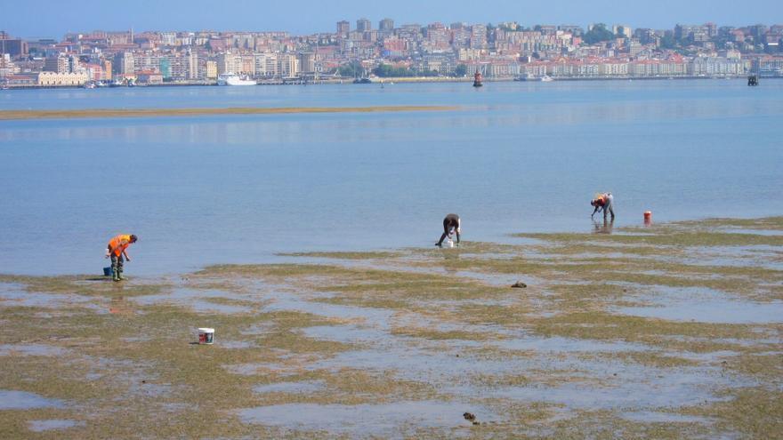 El PP pide al Gobierno que tipifique el furtivismo en el marisqueo como delito en el Código Penal
