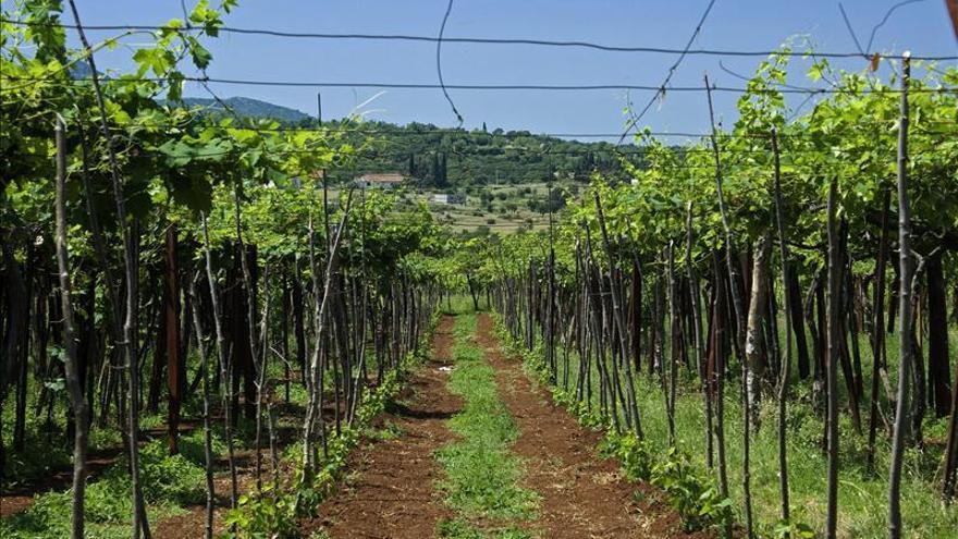 Montenegro quiere renovar sus vinos milenarios para ganar el mercado europeo