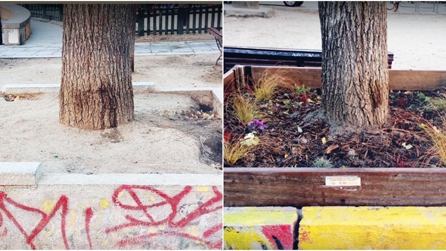 Alcorque de la Plaza del Dos de Mayo, antes y después de la intervención   TU BARRIO SE PLANTA