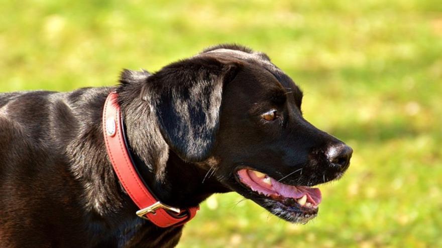 414a74b32920 Cómo elegir el collar y la correa para tu perro