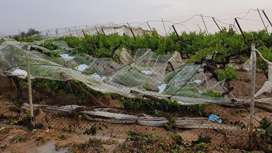 El Ayuntamiento pide ayudas por los daños en la agricultura de las últimas lluvias
