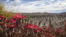 """Un científico chileno crea un """"desierto verde"""" para combatir el cambio climático"""