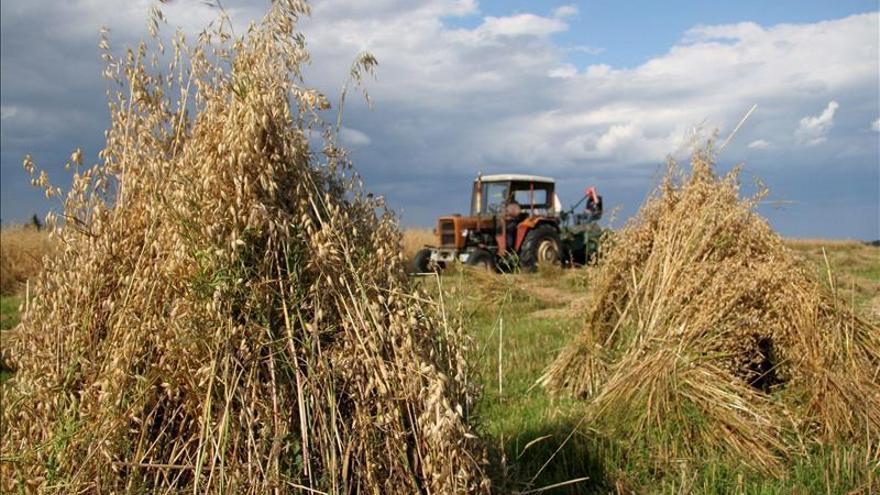 Expertos del sector agrario brasileño analizan posibles consecuencias del TPP