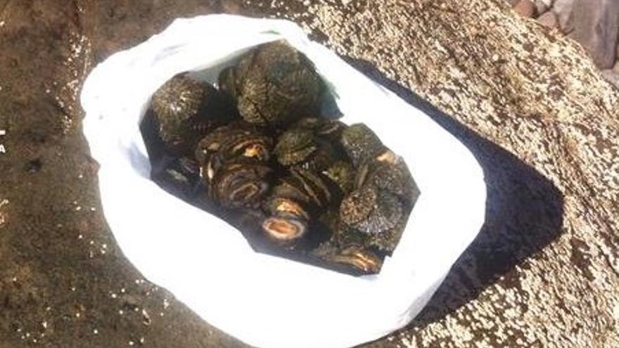La Policía de la capital grancanaria denuncia a cuatro personas por capturar cinco kilos de lapas en Las Canteras.