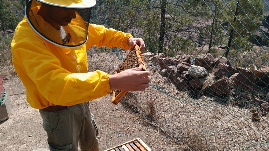 Instalación de colmenas en Inagua