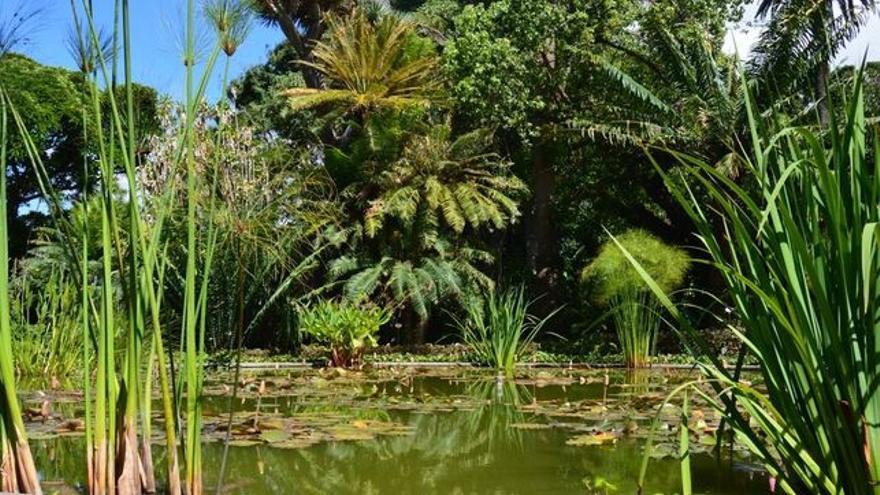 Imagen parcial del parque botánico radicado en Puerto de la Cruz
