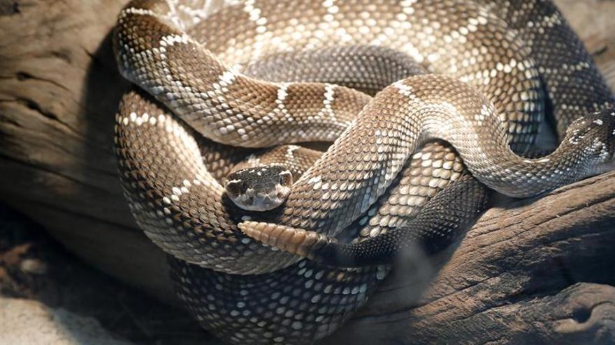 Vivir con más de 120 serpientes para borrar la mala fama de estos animales