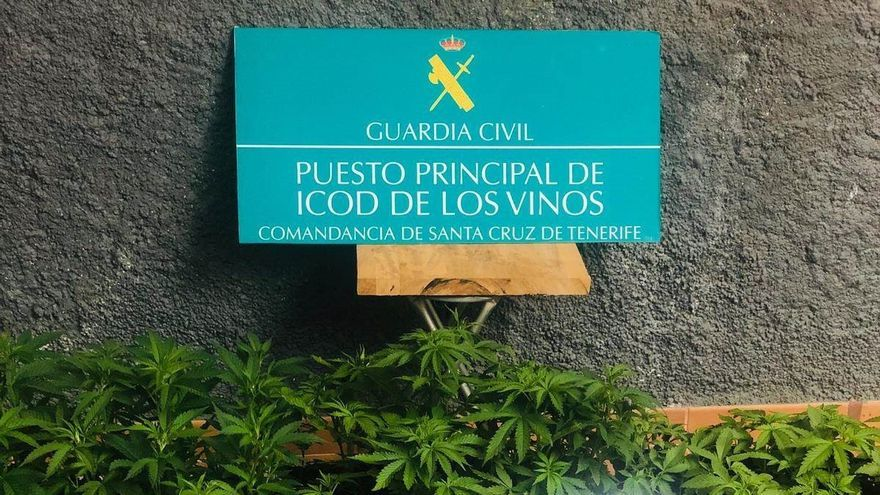 Plantas de marihuana y otros objetos incautados al detenido en Icod