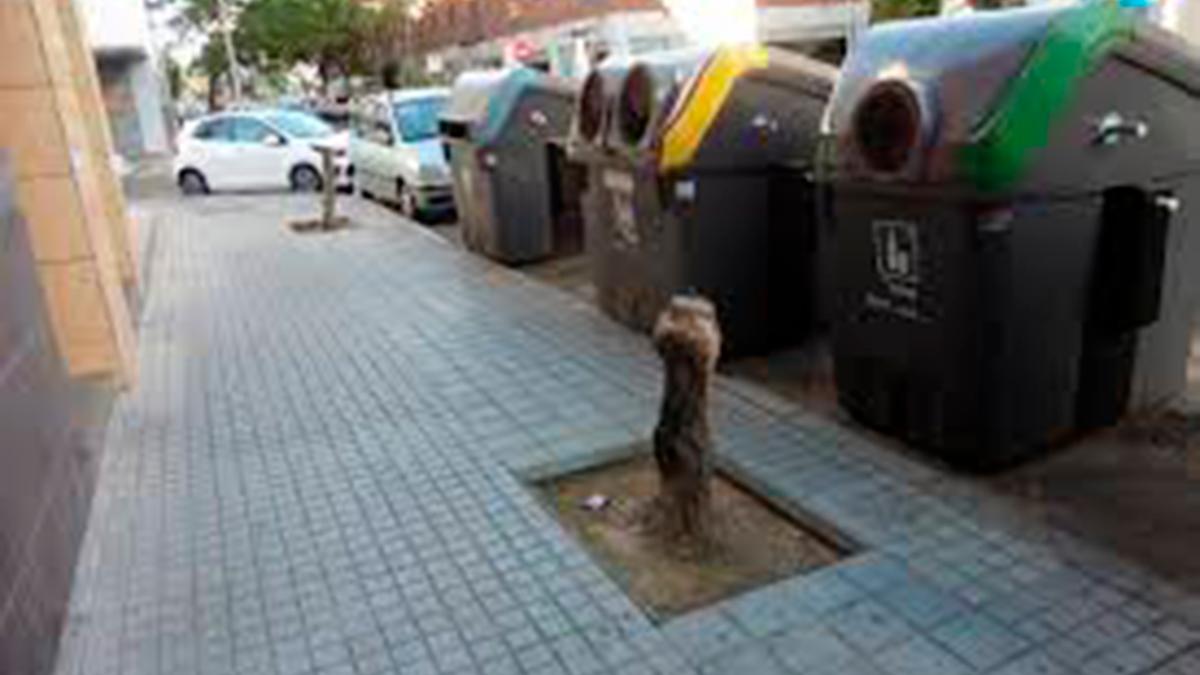 Alcorques sin árboles en una calle de Córdoba   OTRA CÓRDOBA ES POSIBLE