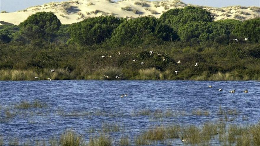 WWF denuncia que el acuífero de Doñana debe declararse en mal estado para su protección