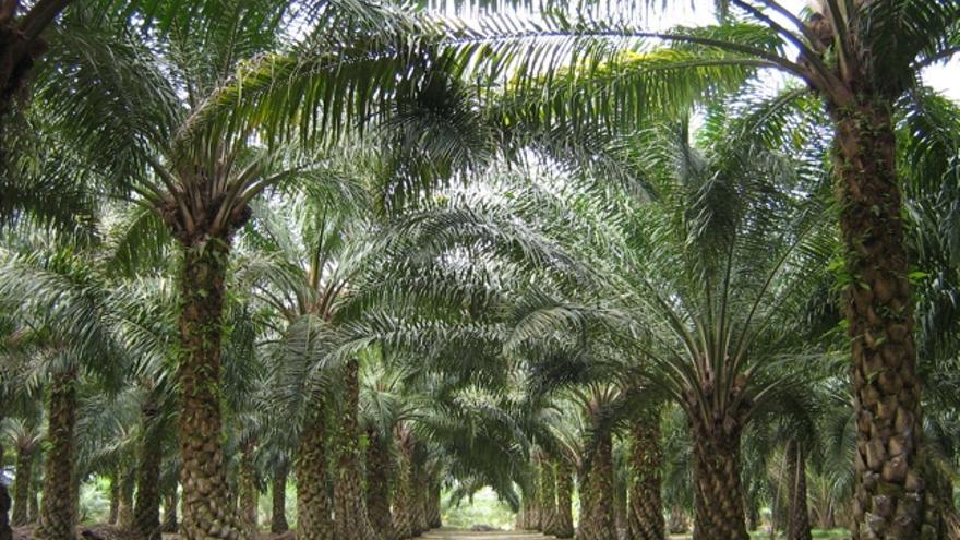 Resultado de imagen para aceite de palma en africa