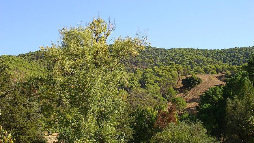 Paisaje del Parque Nacional de los Montes de Málaga.