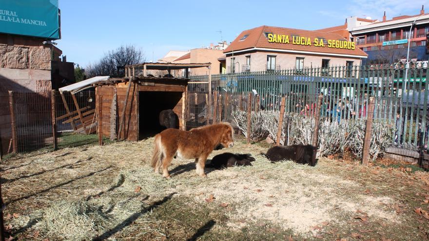 Ponis en el Belén Viviente de Caja Rural de Toledo