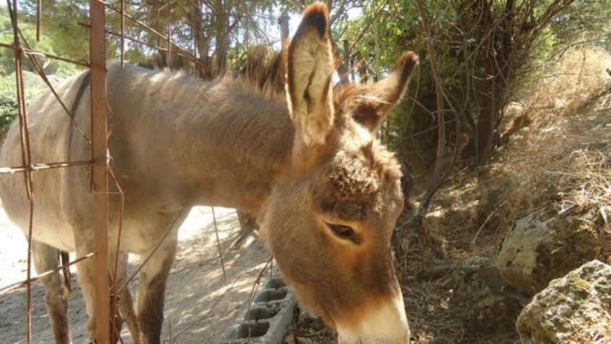 La burra Severina y los animalistas: ¿Héroes o delincuentes?