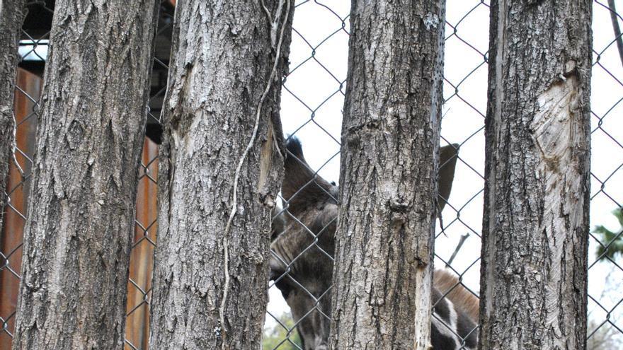 Estas organizaciones no tienen animales en propiedad, como hacen creer. Ninguno de los zoos que las incorporan han firmado ningún contrato