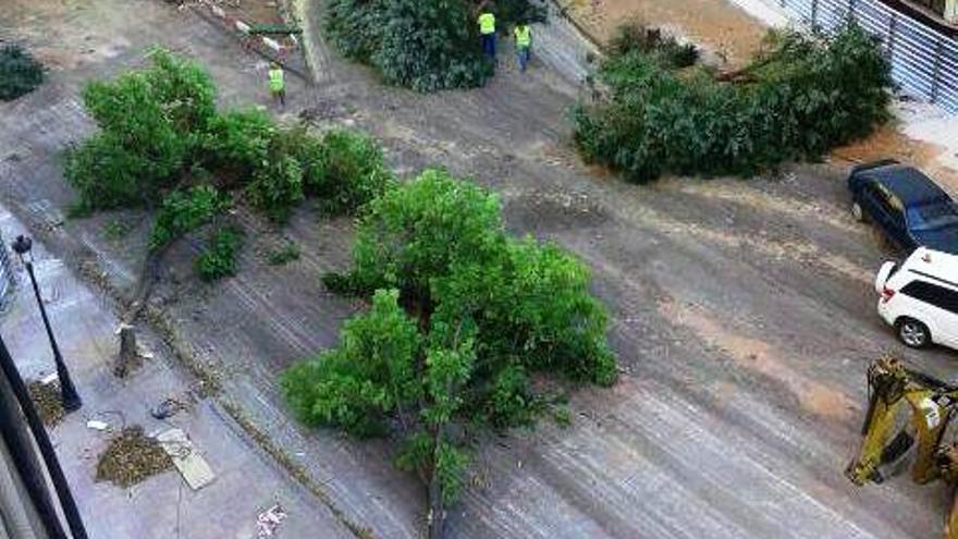 Tala de varios de los árboles en Primo de Rivera
