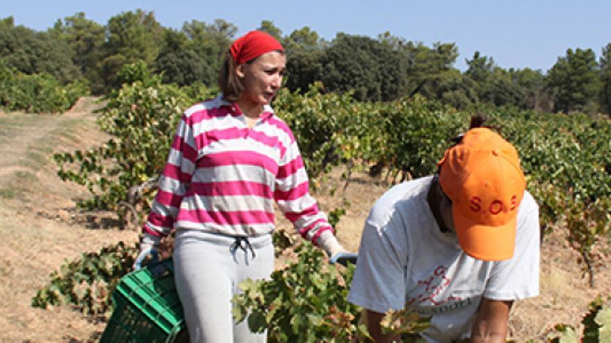 Mujeres en el sector agrario