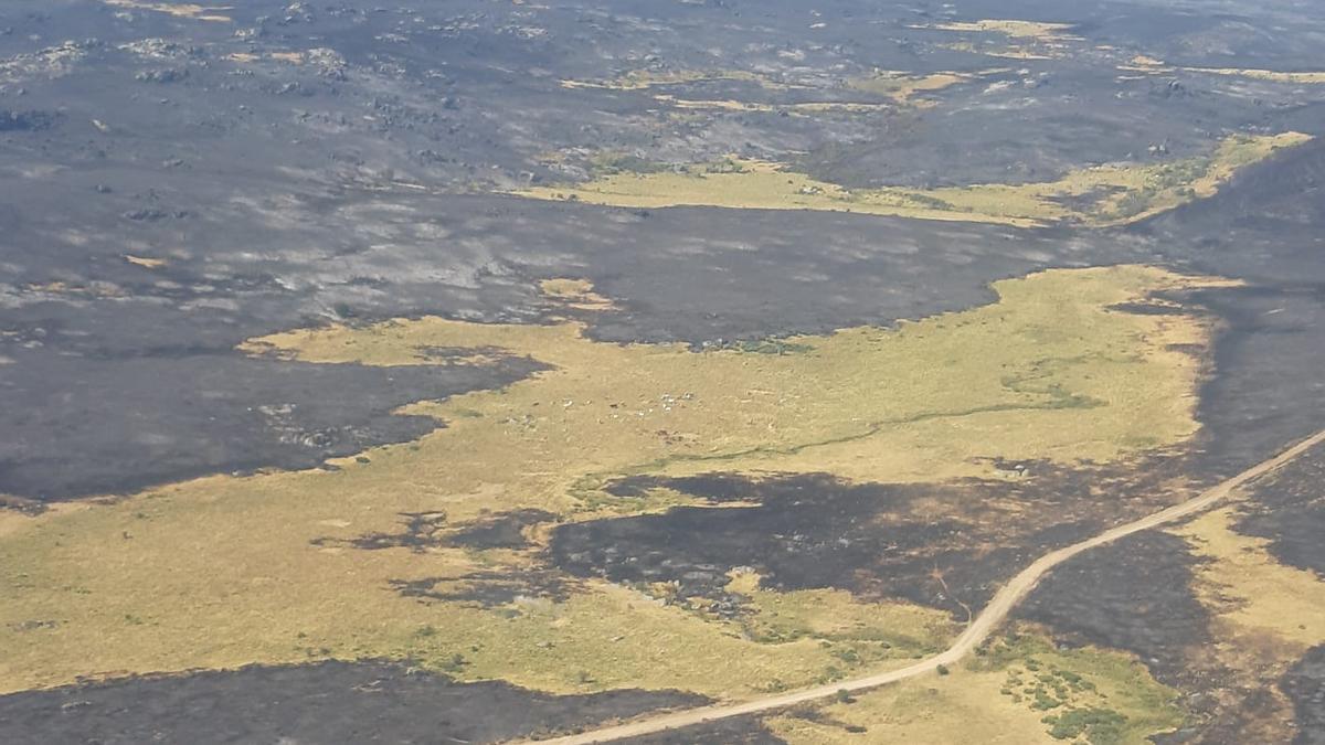 Zona quemada en el incendio de Navalacruz (Ávila) en una imagen aérea