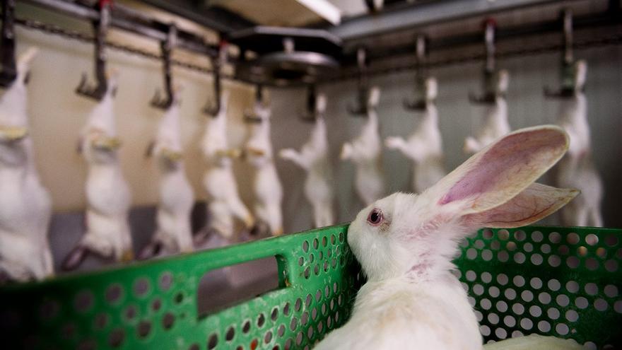 Matadero de conejos.