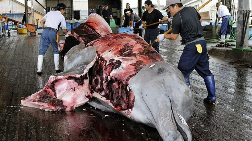 Japón acoge la primera subasta de carne de ballena desde que retomara la caza