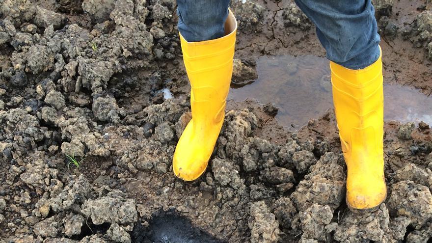 Tierra contaminada en la zona de Bomu Manifold, que Shell aseguró haber limpiado en 2012.   Fotografía: Amnistía Internacional.