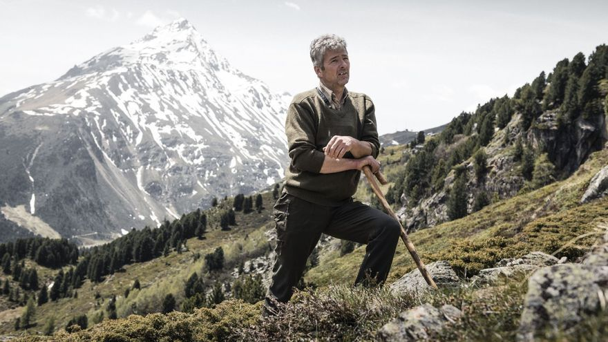 Ovejas montesas Tirol.