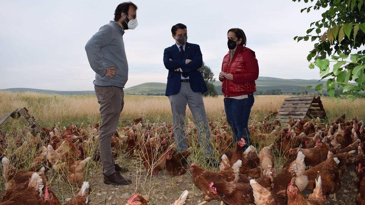 Bellido (centro) y Torrent (dcha) visitan la granja de cría de gallinas.