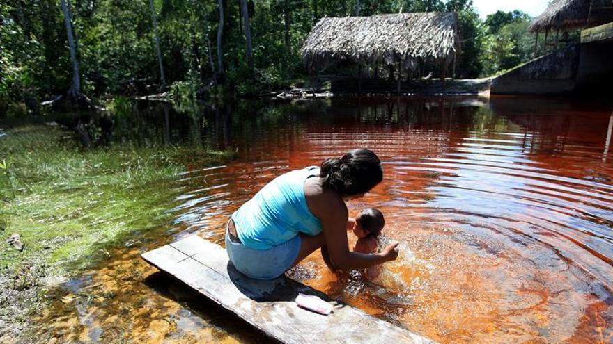 Los bosques secundarios, un arma contra el cambio climático en Latinoamérica