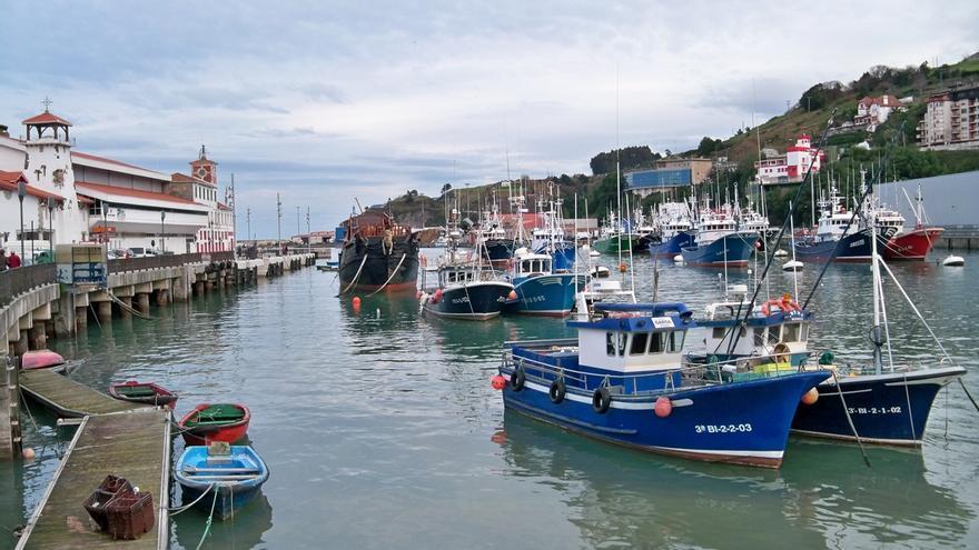 El Gobierno vasco pide la urgente apertura de la pesquería del verdel