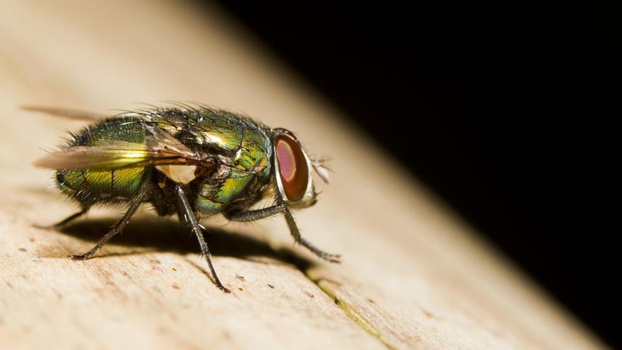 Un insecto.