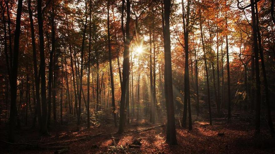 Los árboles necesitan hasta cuatro años para recuperarse de una sequía