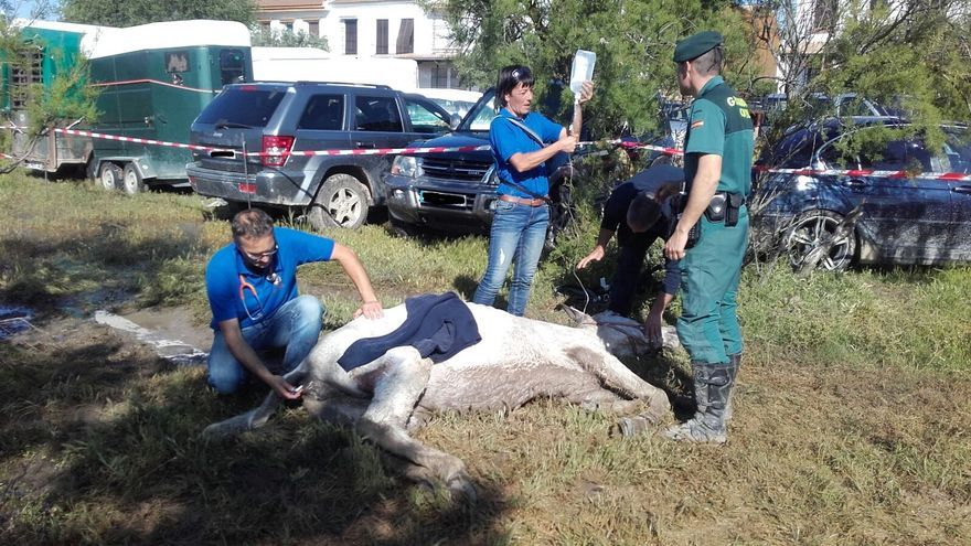 Veterinarios atienden a una mula el pasado domingo en El Rocío, que finalmente falleció.