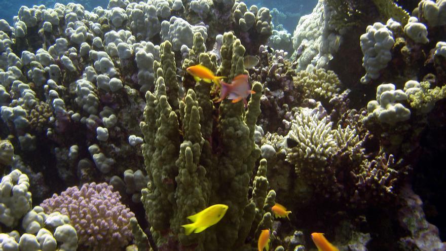 Arrecifes de coral en las aguas de Aqaba. Matt Kieffer (CC)