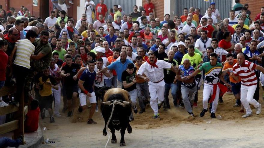 Carrera sin heridos de un toro enmaromado reservón en Benavente (Zamora)