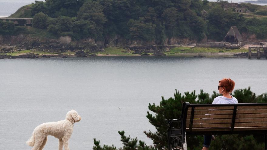 Entrar acompañado de una mascota a Reino Unido no es tarea fácil, pero salir lo va a ser menos.