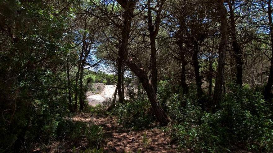 La UNESCO podría decidir en 2017 sobre Doñana tras recibir informe de España