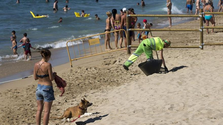Barcelona estrena su primera playa para perros