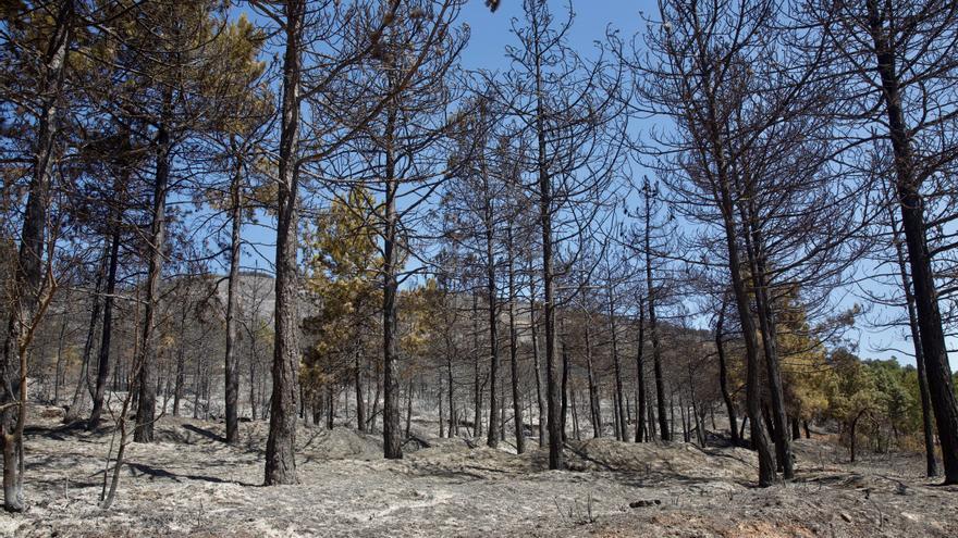 Declarado un incendio en Ribafrecha (La Rioja), al parecer, por un rayo