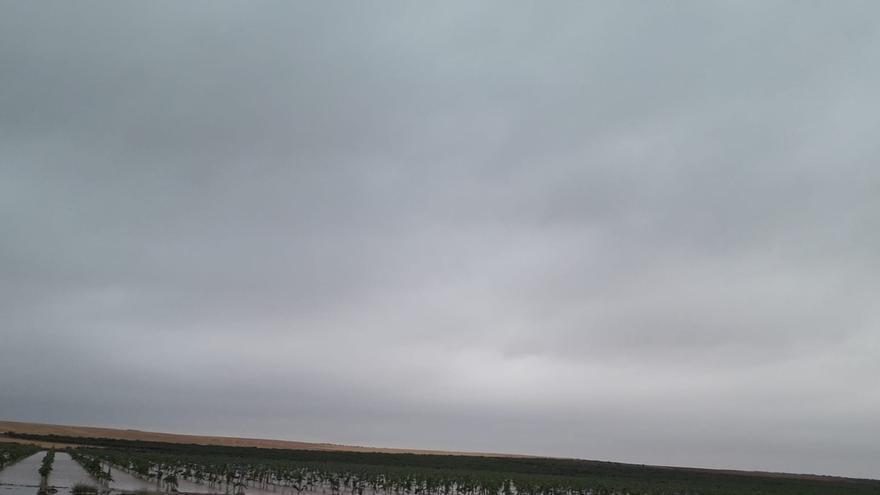 Las denominaciones de origen 'Almansa' y 'Jumilla' son las más afectadas por el temporal en Castilla-La Mancha
