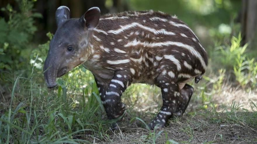 Diez especies que solamente se encuentran en Nicaragua enfrentan la extinción
