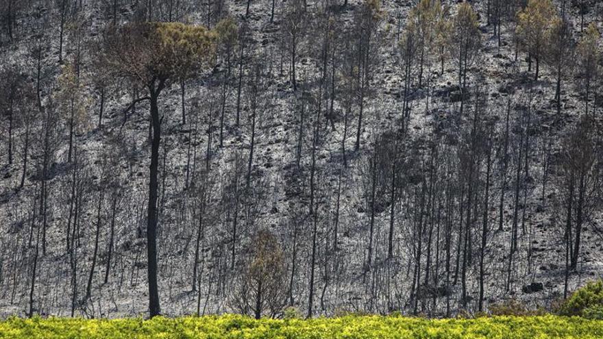 Detenidos tres agricultores por causar el incendio de Carcaixent (Valencia)
